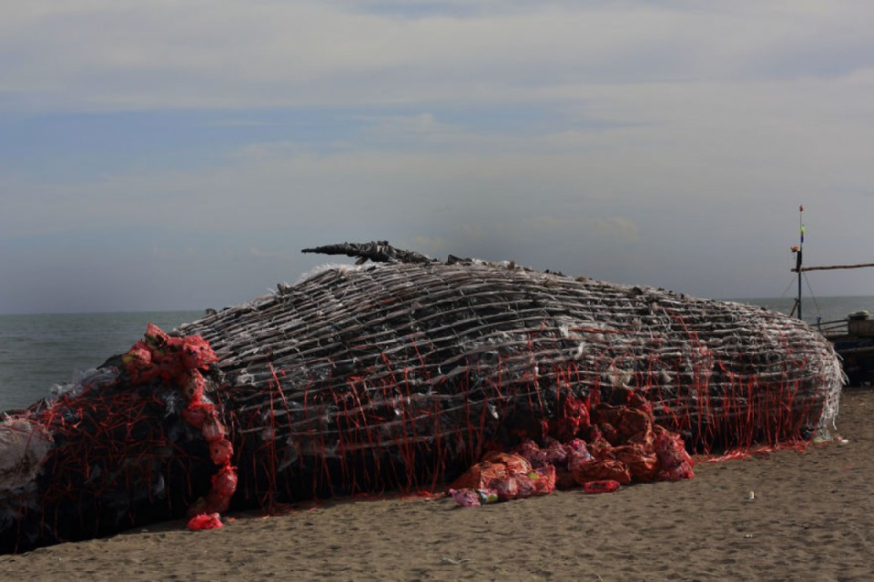 A fake whale stranded on a beach in the Philippines to fight against ocean pollution